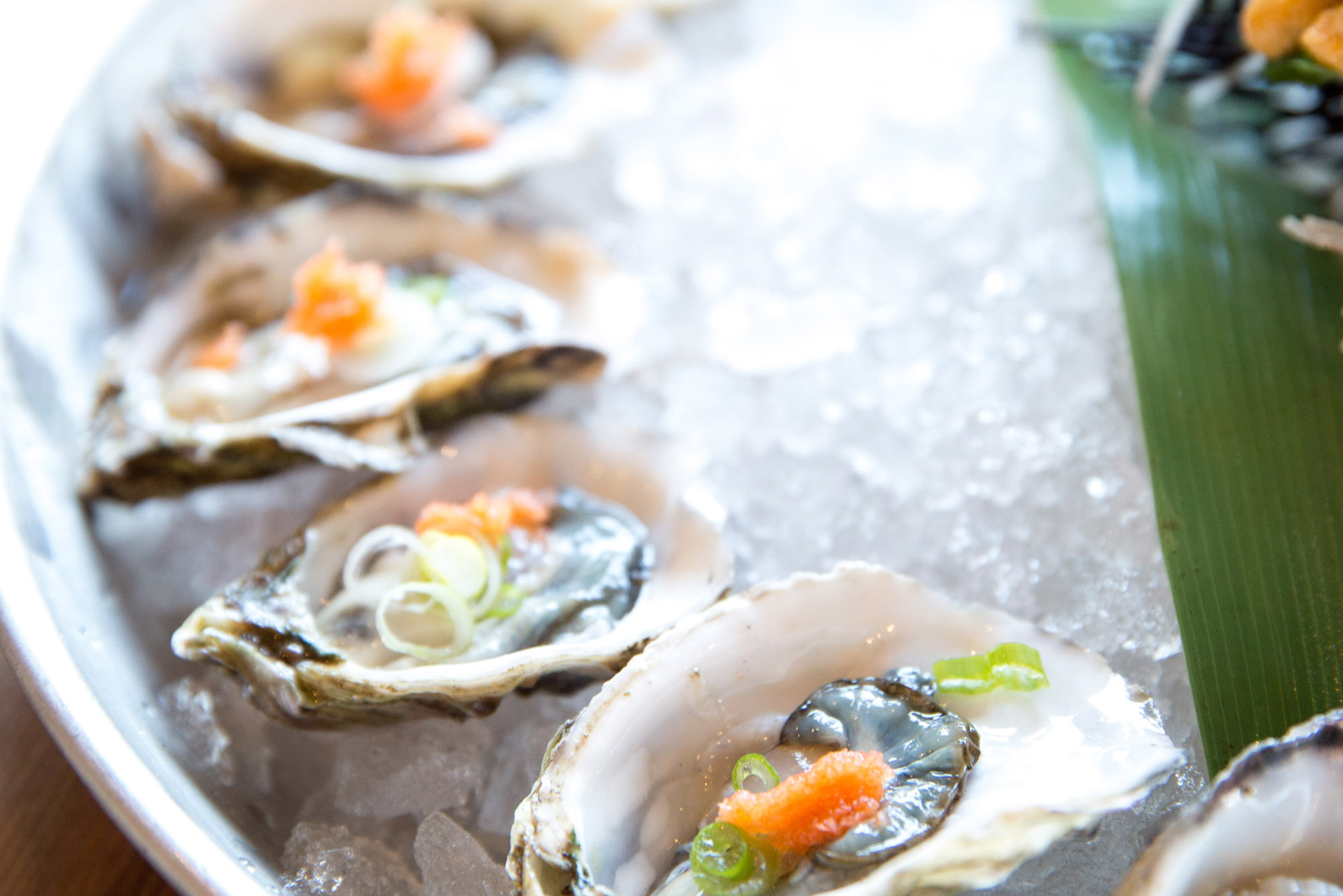 Delicious oysters at The Dornie | Seafood Restaurant near Skye