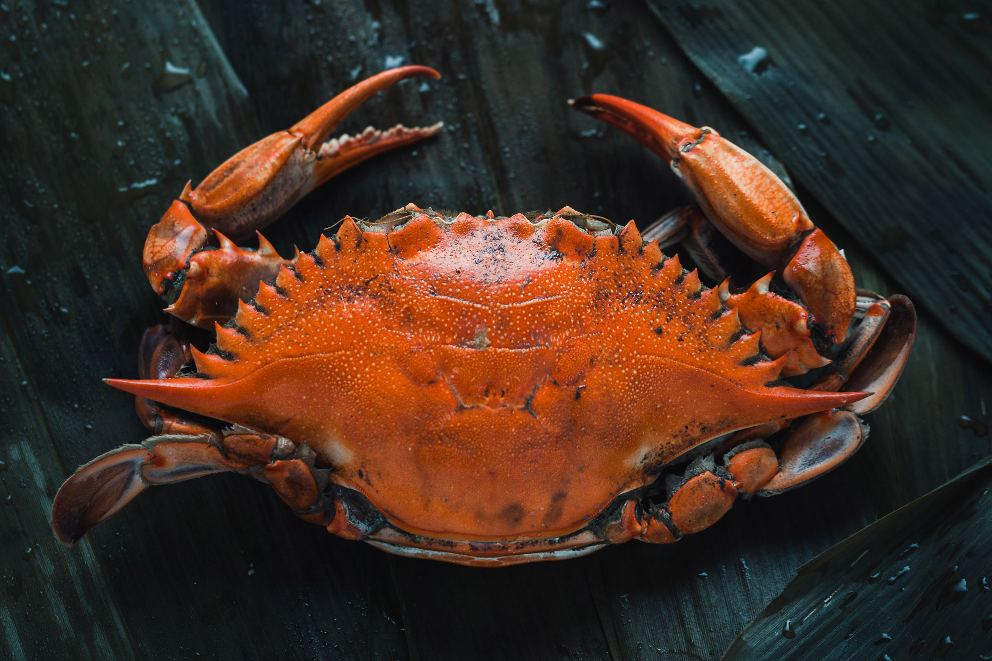 Local crab at The Dornie | Seafood restaurant near Skye