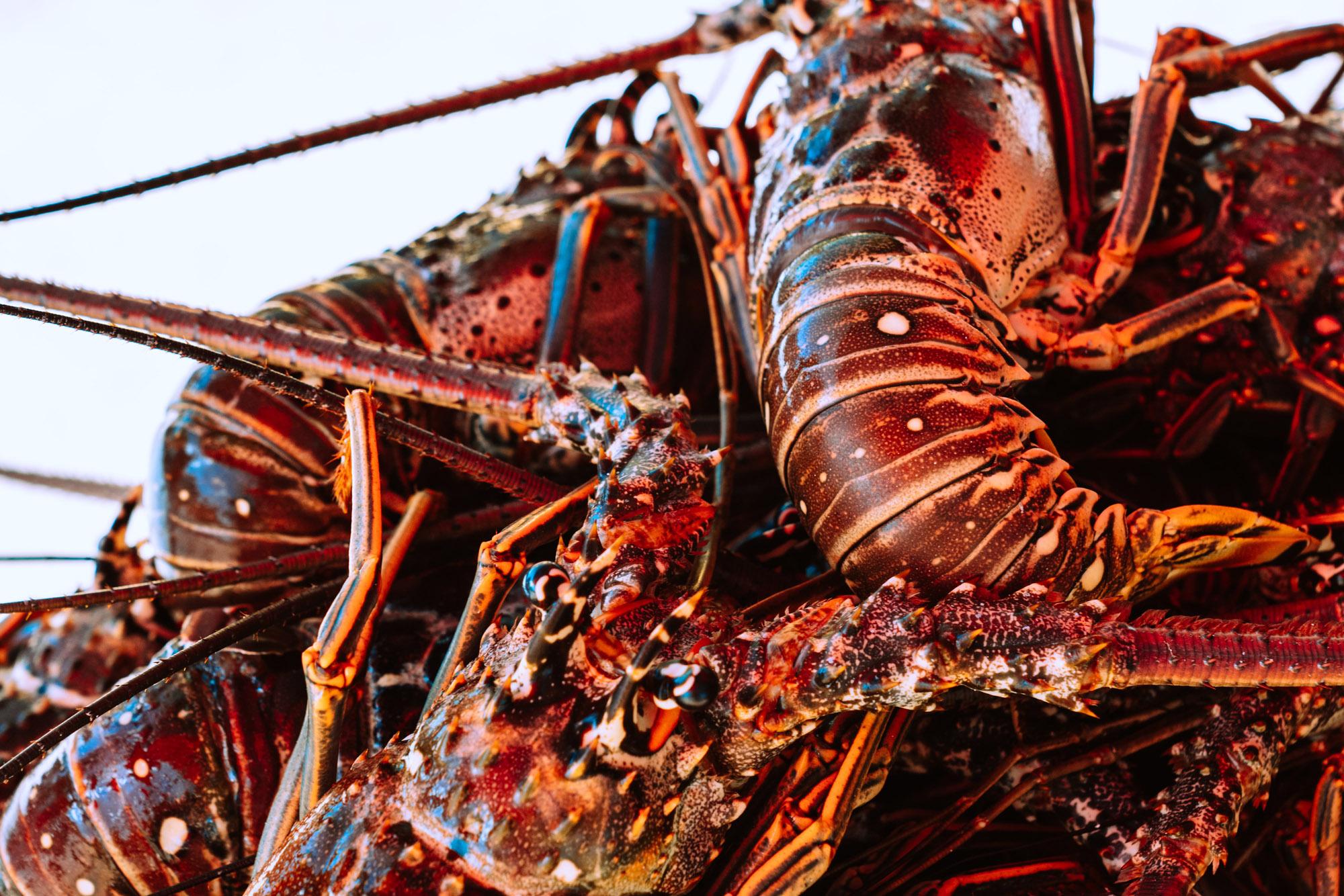 Fresh lobster at The Dornie | Seafood restaurant Skye